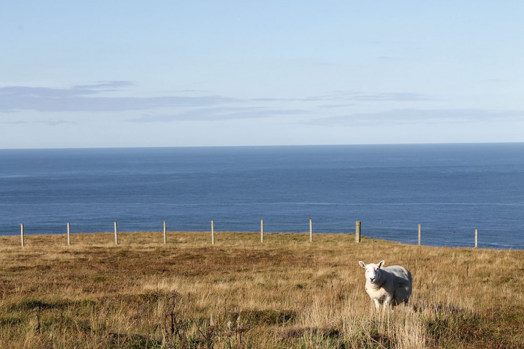 Schottland_Dunnet-Head_fraeulein-draussen_2