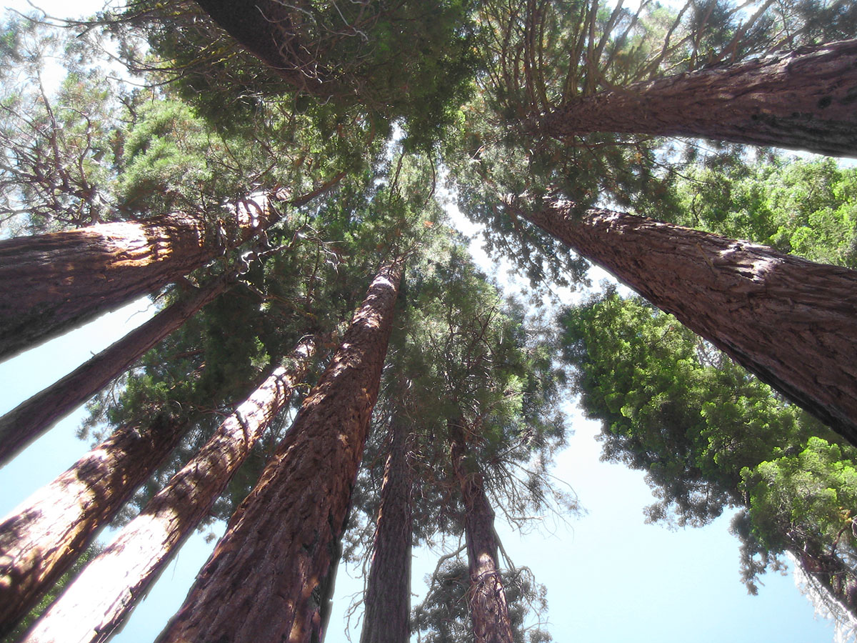 Sequoia-National-PArk_Fraeulein-Draussen