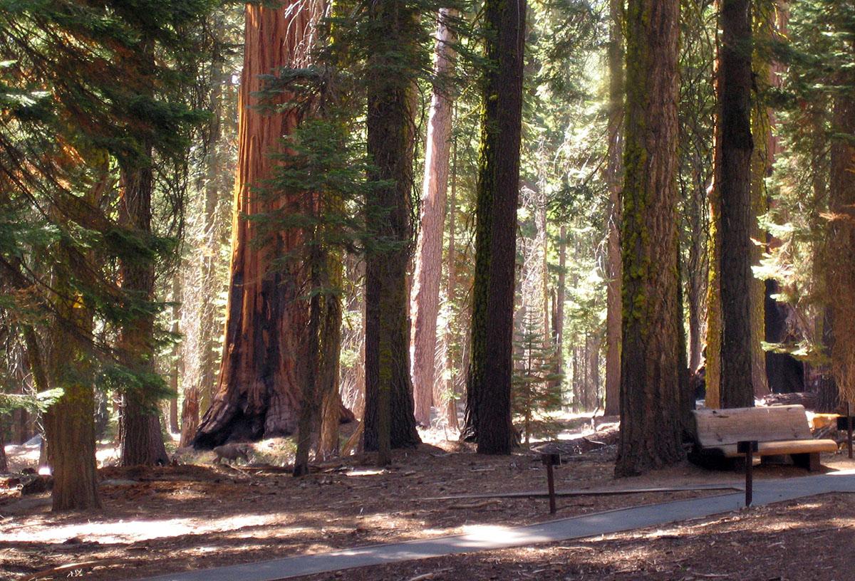 Sequoia-National-Park_Fraeulein-Draussen_2