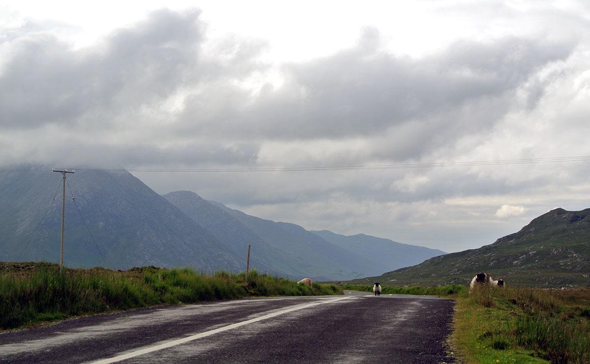 Schafe_Irland_Connemara_fraeulein-draussen