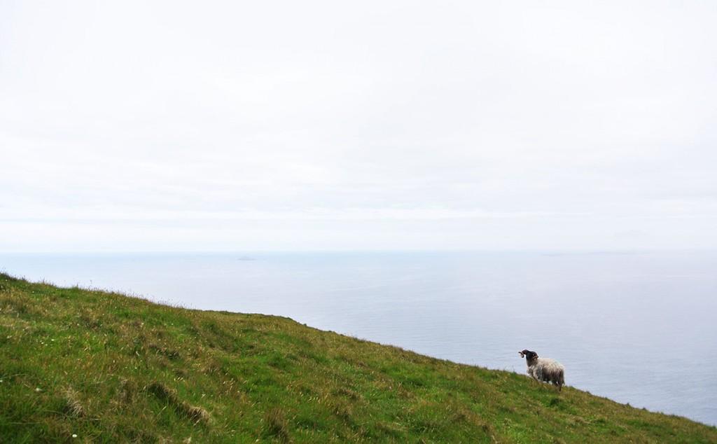achill-island-wandern-schafe_fraeulein-draussen