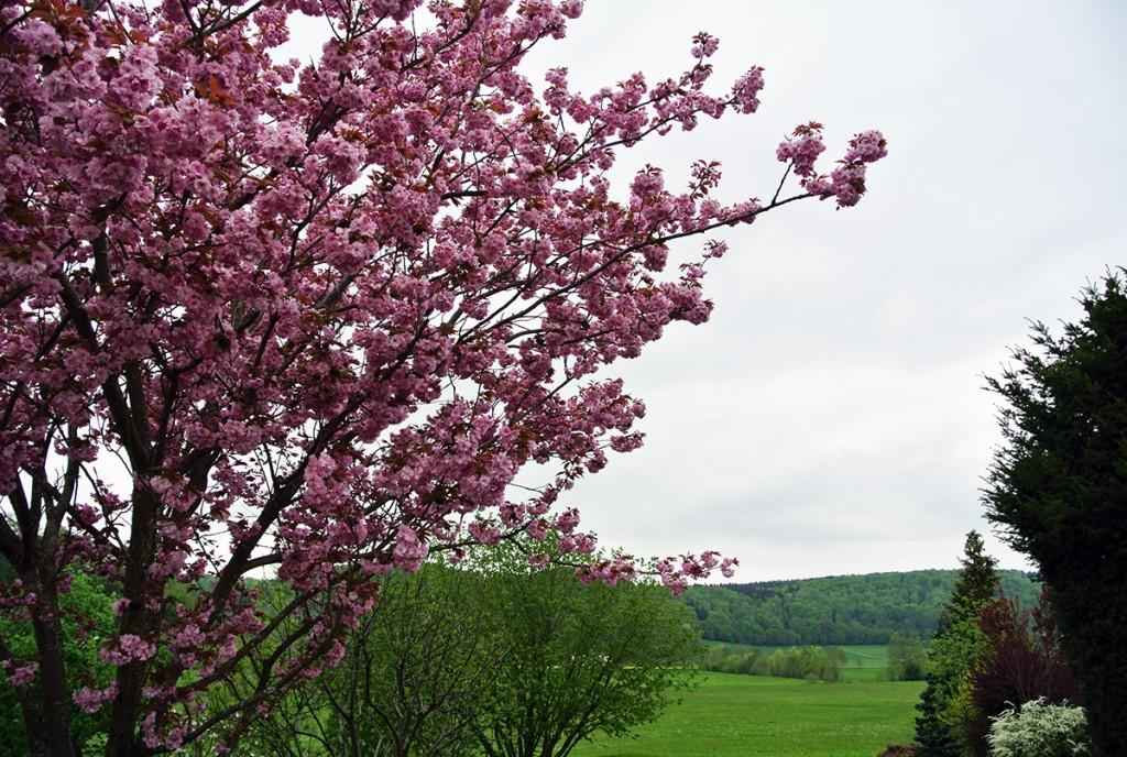 kirschbaum-altmuehltal_fraeulein-draussen