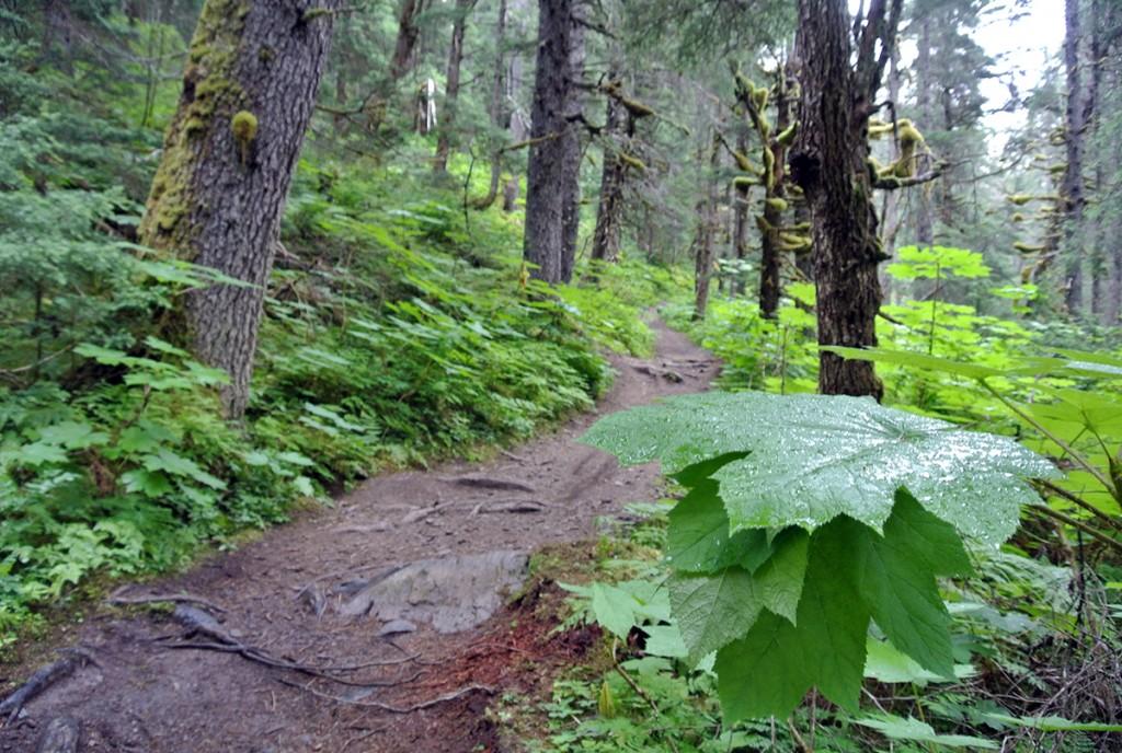 wanderweg-lost-lake-kenai-alaska_fraeulein-draussen_2