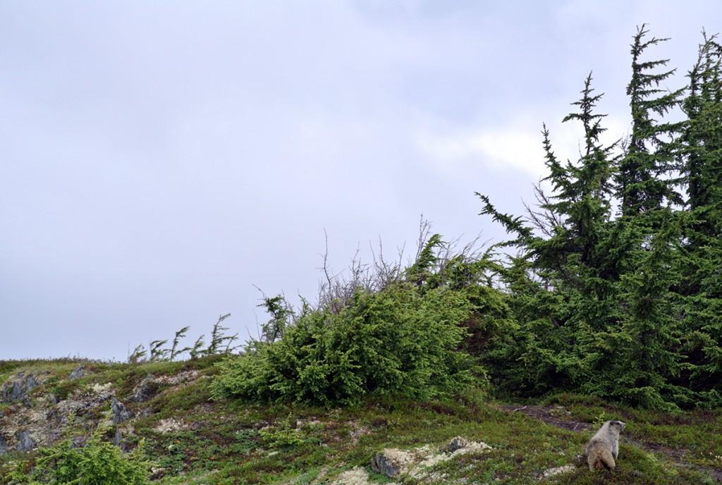 lost-lake-wandern-camping-kenai-alaska_frauelein-draussen_2