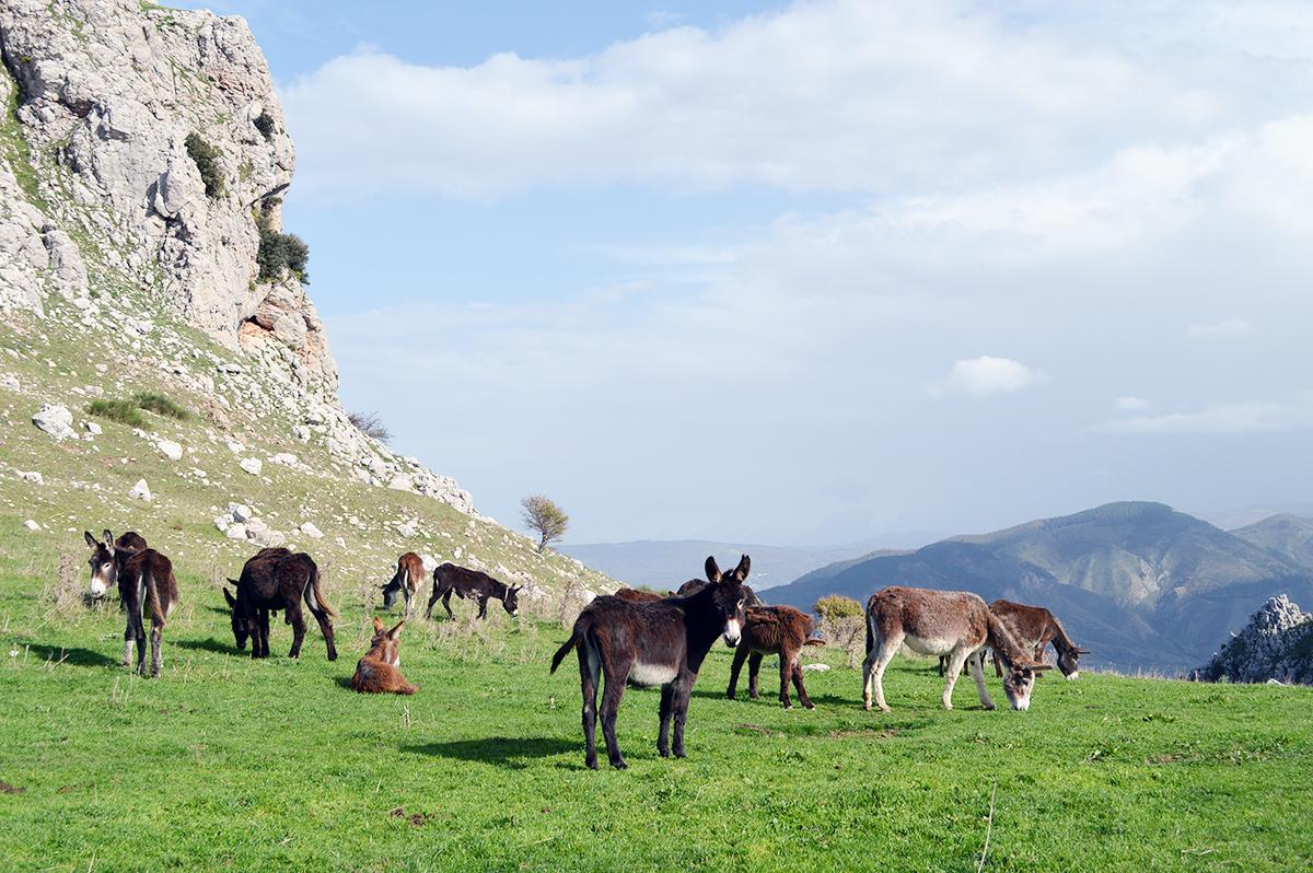 sizilien-wandern-rocche-del-crasto-nebrodi_6_fraeulein-draussen_b