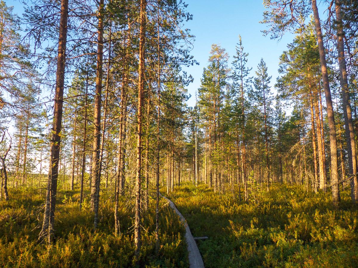 WandernKarelien-Wald2