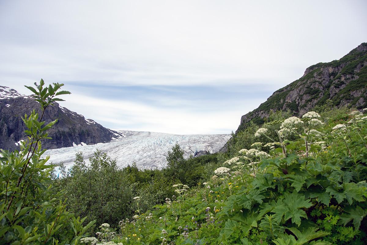Blick auf den Exit Glacier vom Harding Icefield Trail aus
