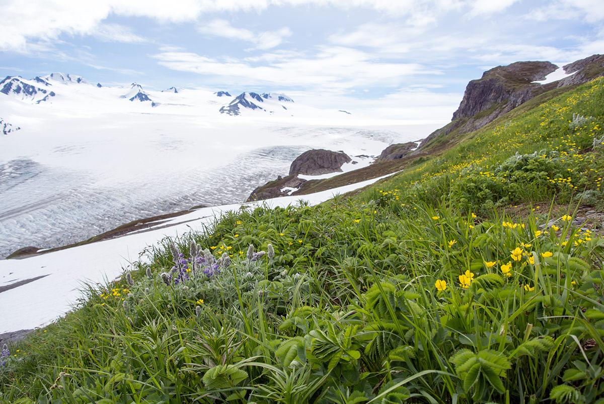 Blick auf den Exit Glacier und das Harding Icefield