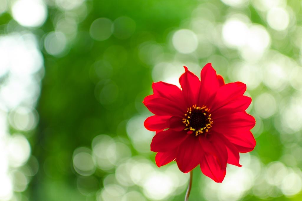 Blüte-mit-Lichtpunkten-22places