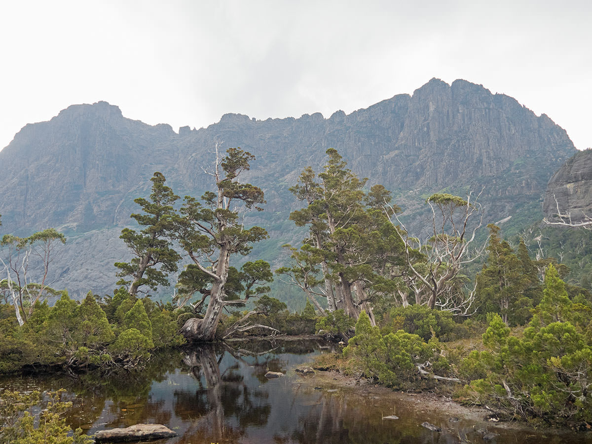 Am Artists Pool mit Blick auf die Rückseite des Cradle Mountain