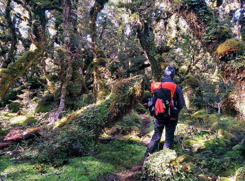 Gustofrenzy auf dem Te Araroa Trail, Neuseeland