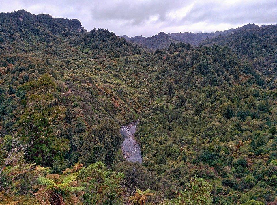 Durch den Tongariro Forest auf dem Te Araroa Trail
