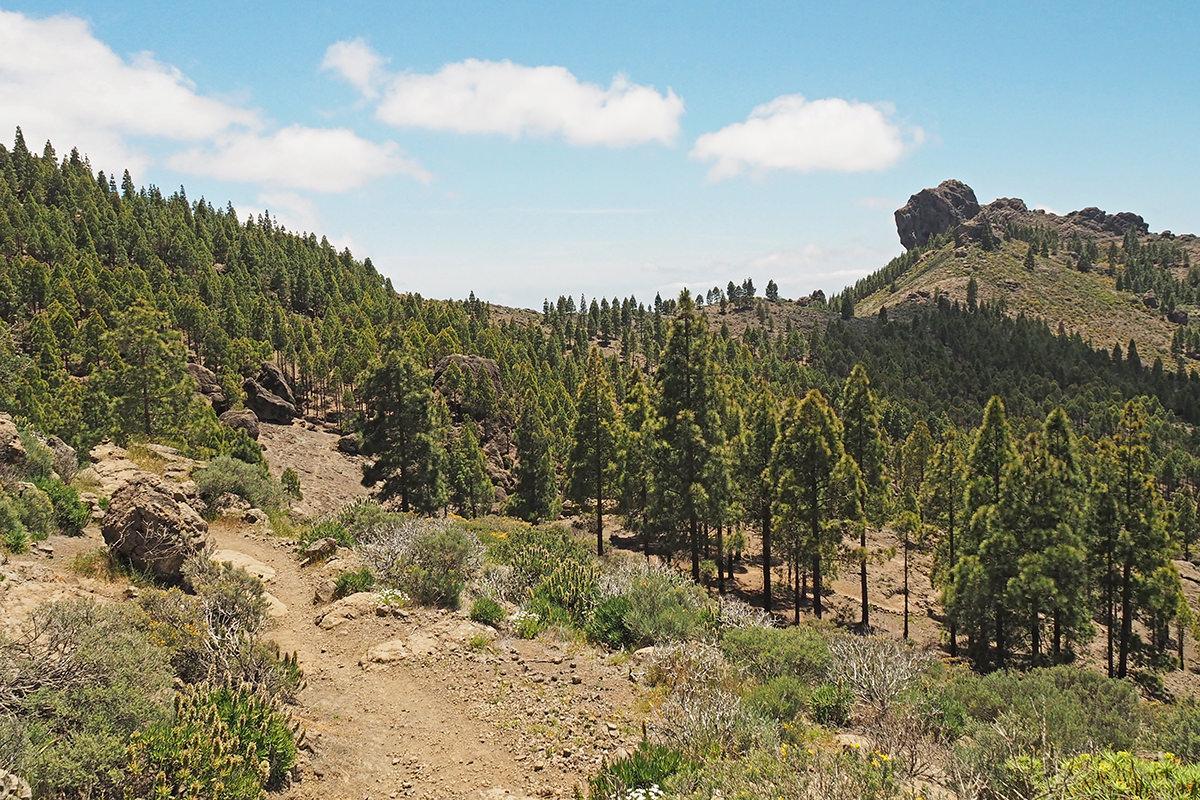 Wanderweg auf Gran Canaria