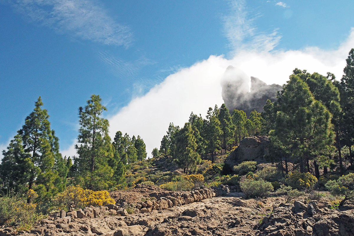 Der Roque Nublo im Nebel