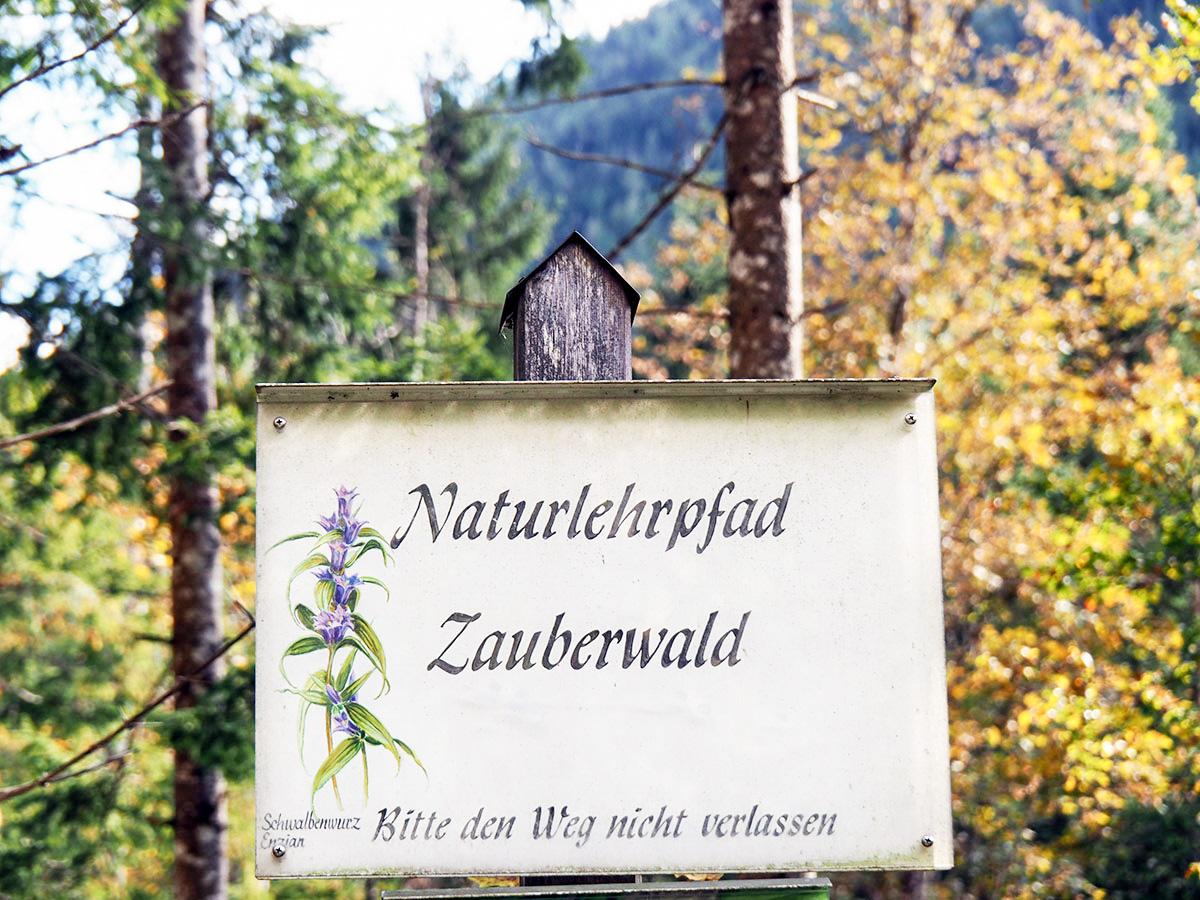 Zauberwald Wanderung