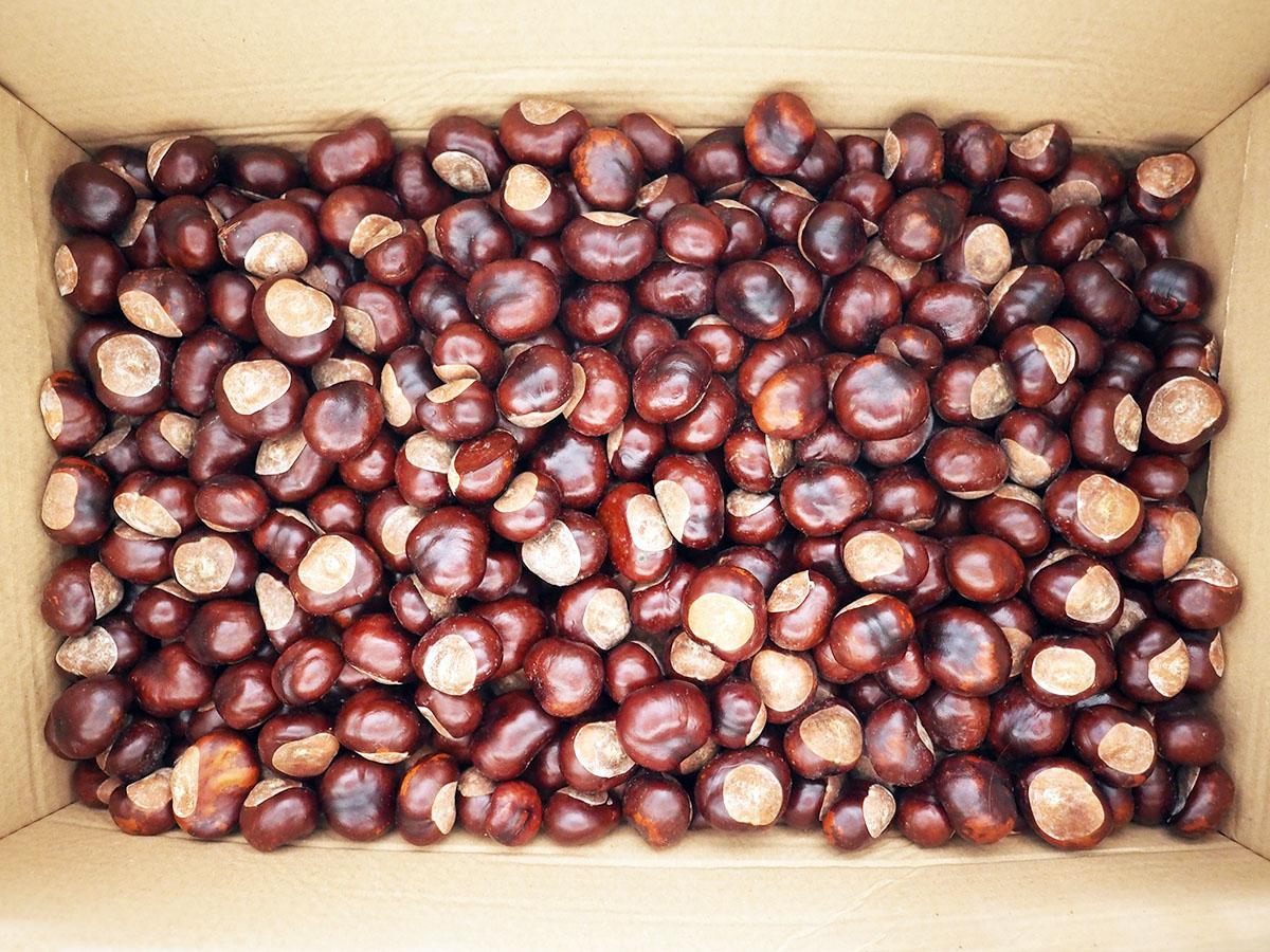 5-6 Kilo Kastanien reichen für ein Jahr waschen
