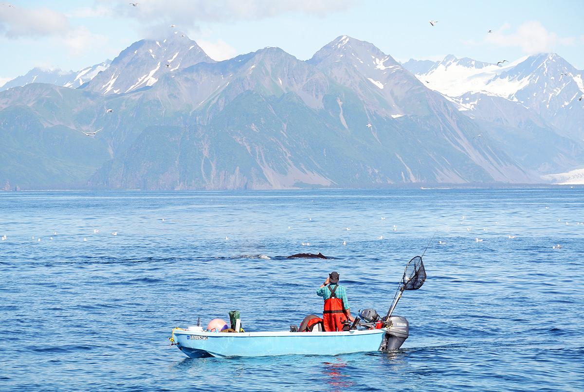 Im Reich der Riesen – Wale beobachten in Alaska