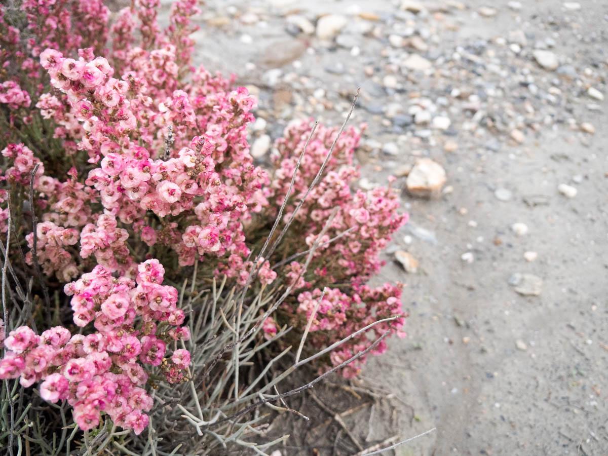 Tabernas Wüste im Winter