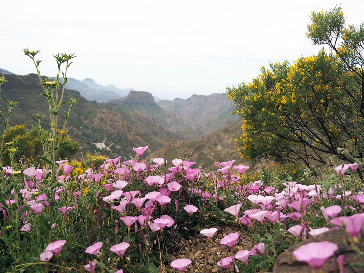 Wandern auf Gran Canaria im Frühling