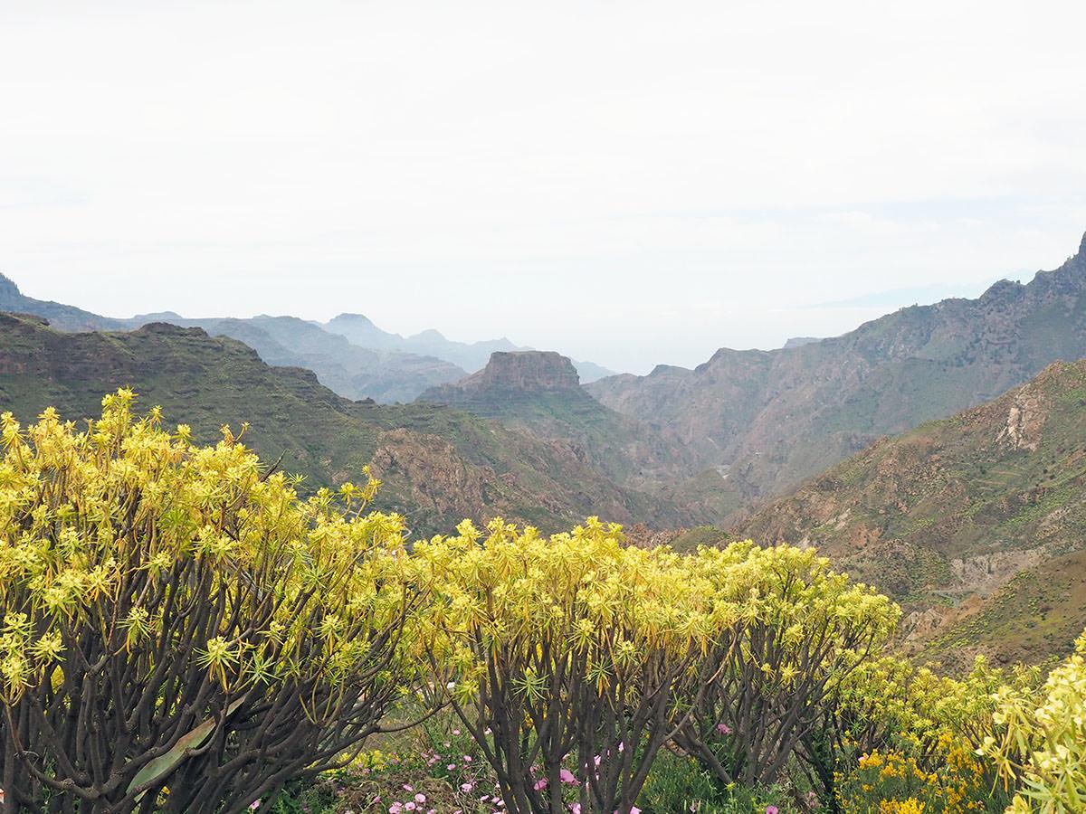 Frühling auf Gran Canaria