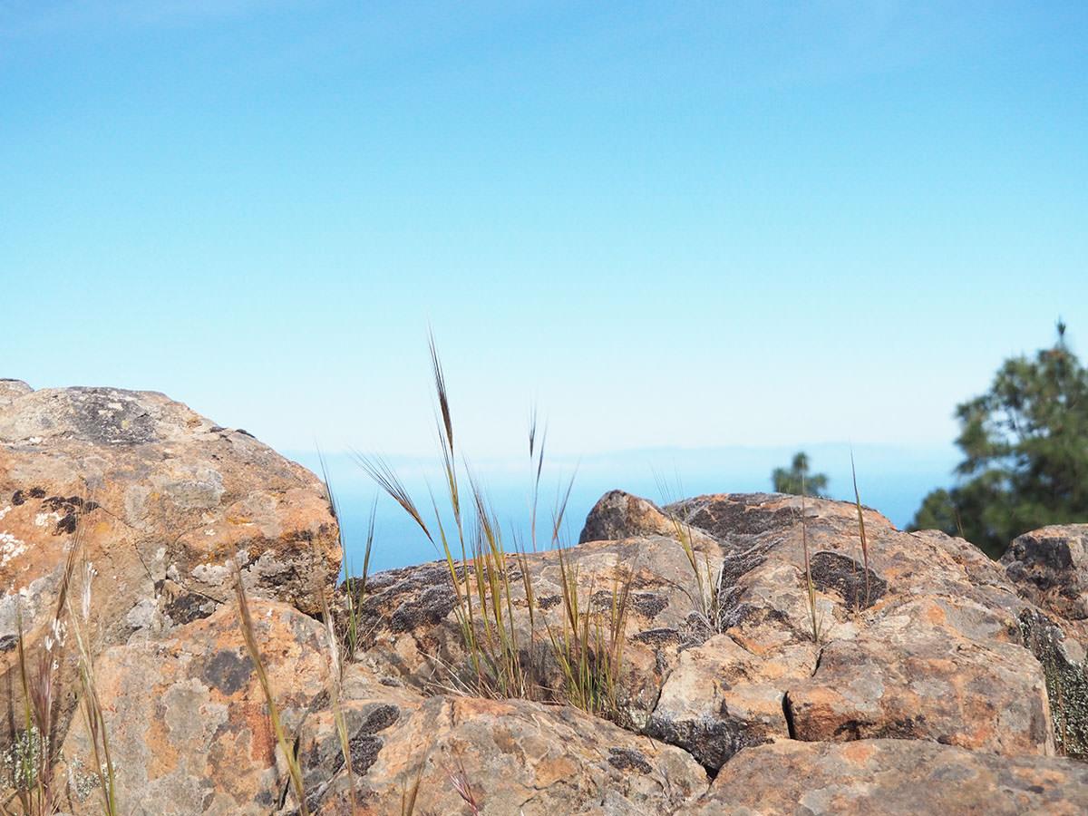 Wanderung auf den Alta Vista auf Gran Canaria