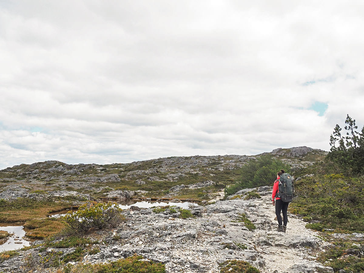 Wandern auf Tasmanien im Cradle Mountain Nationalpark