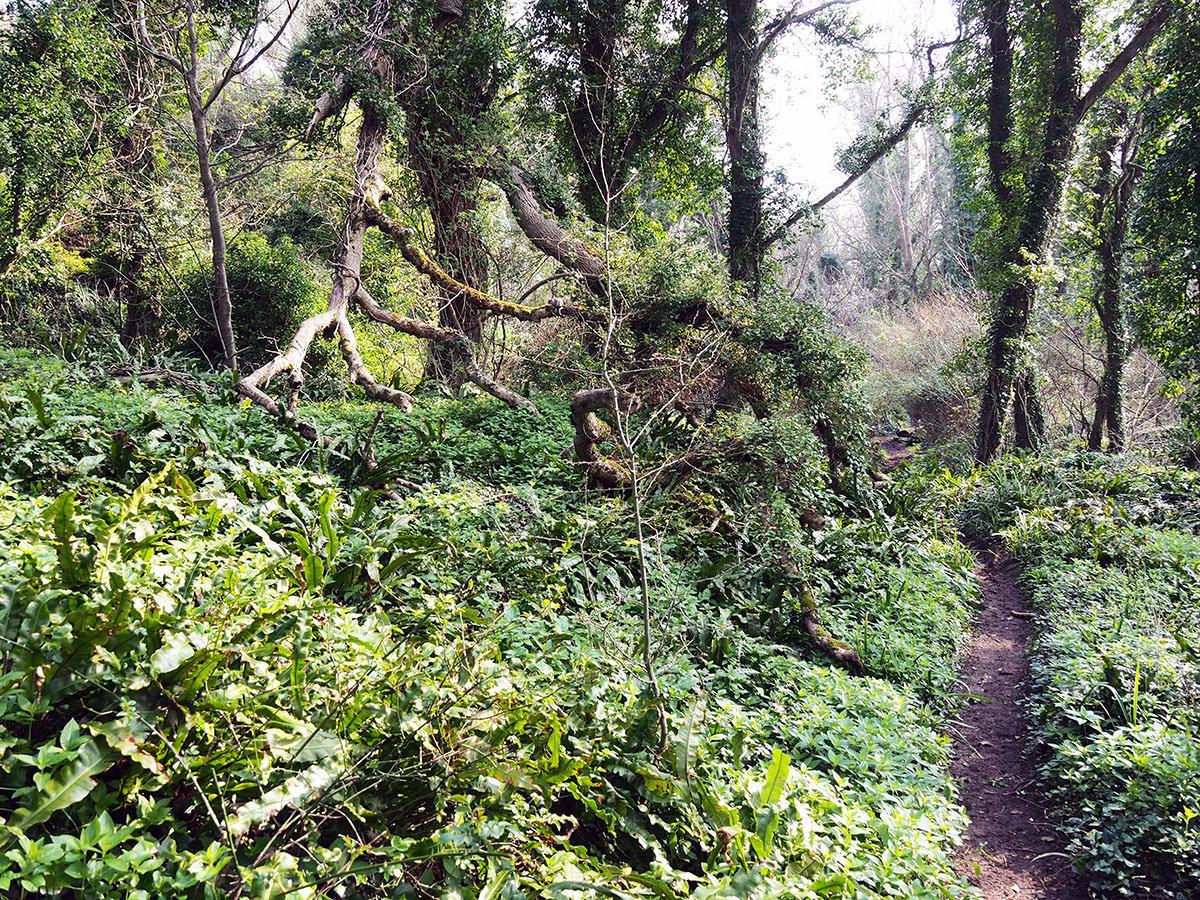 Wald bei Lyme Regis