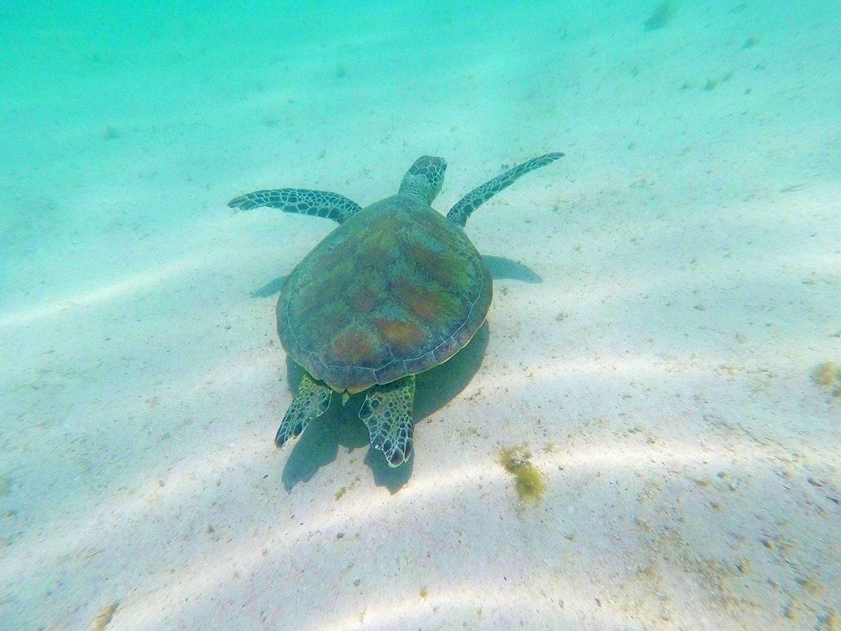 Erfreut Meeresschildkröte Färbung Seite Realistisch Fotos - Beispiel ...