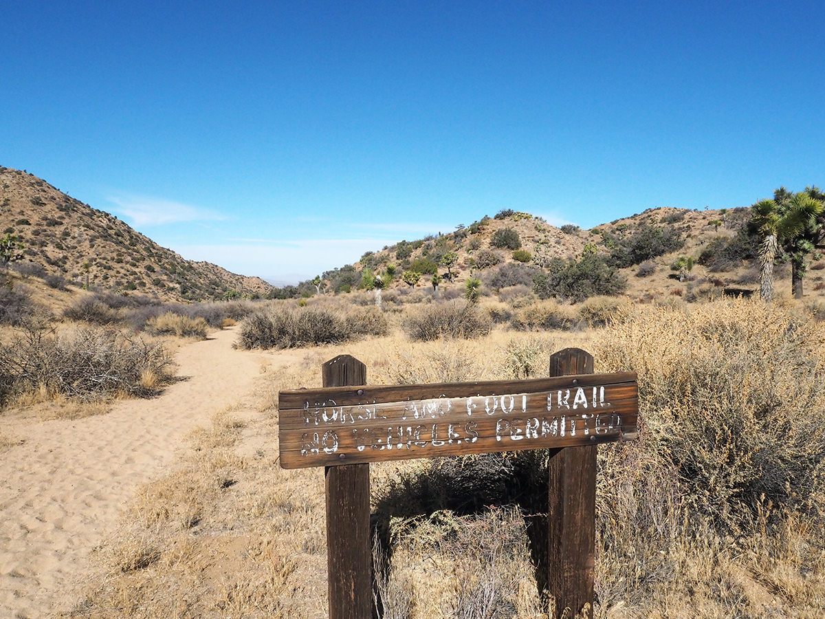 Trekkingtour auf dem California Riding and Hiking Trail im Joshua Tree Nationalpark