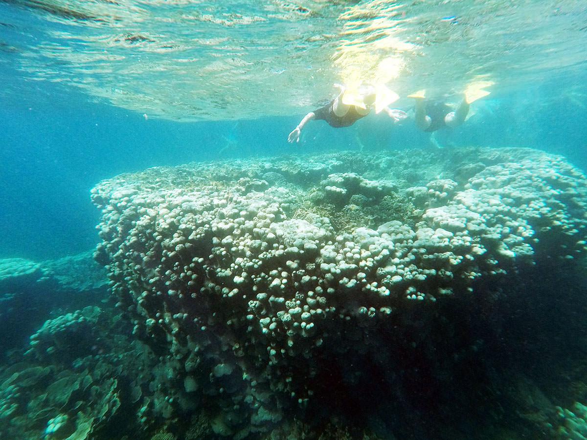 schnorcheltour in coral bay