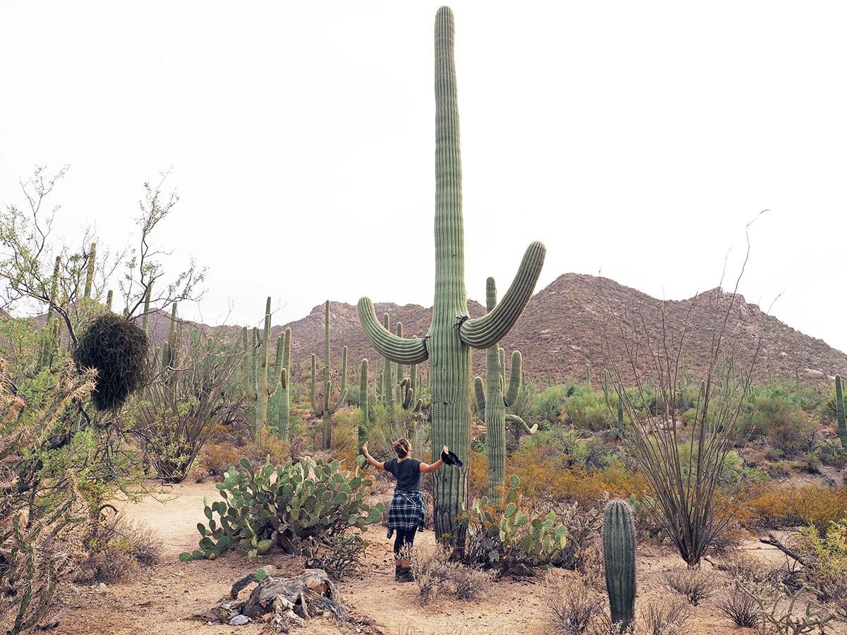 Saguaro Nationalpark Reisetipps