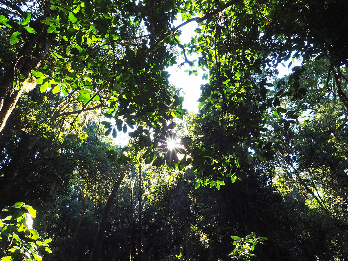 amatola trail urwald