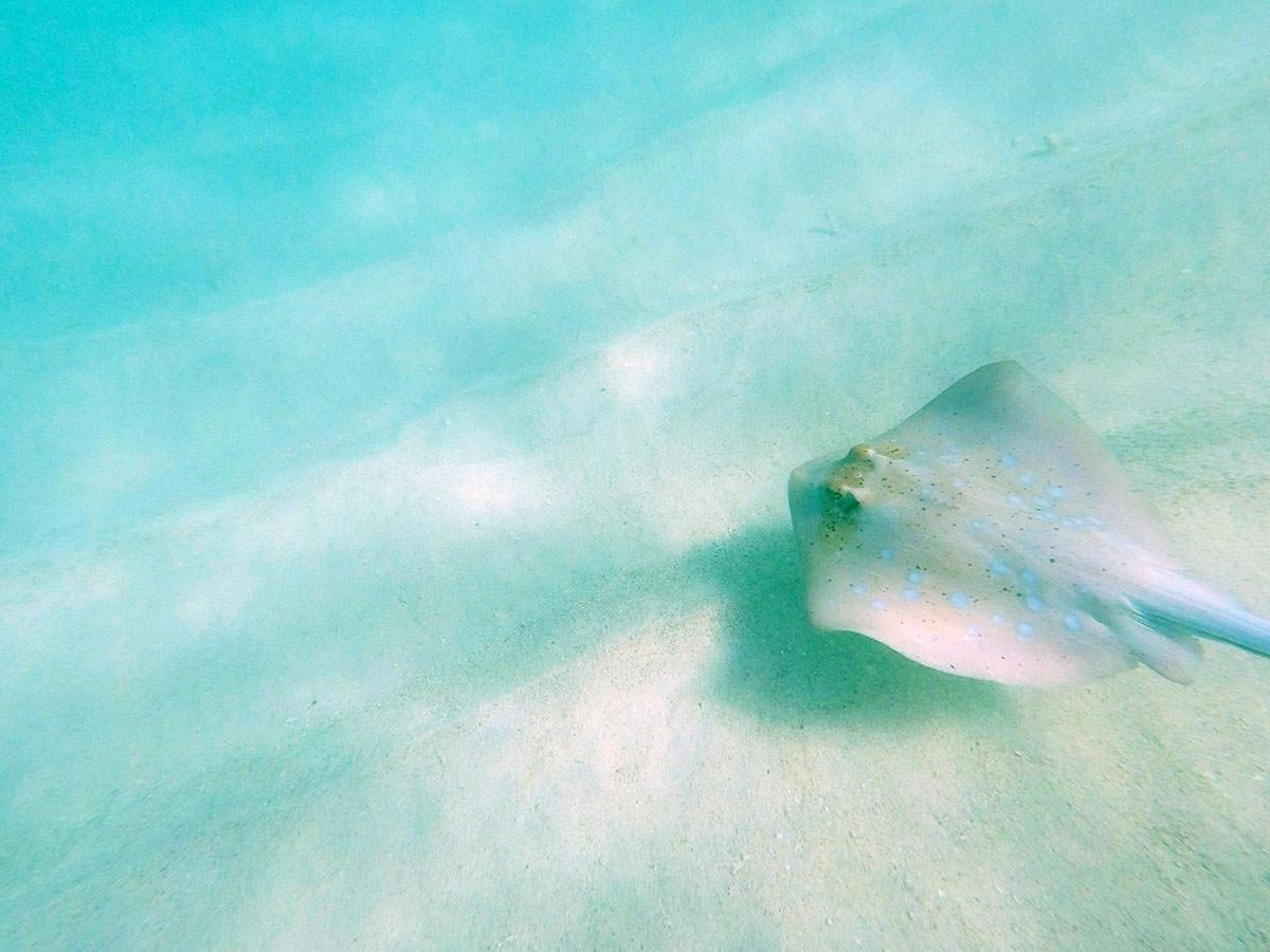 sandrochen am ningaloo reef in westaustralien