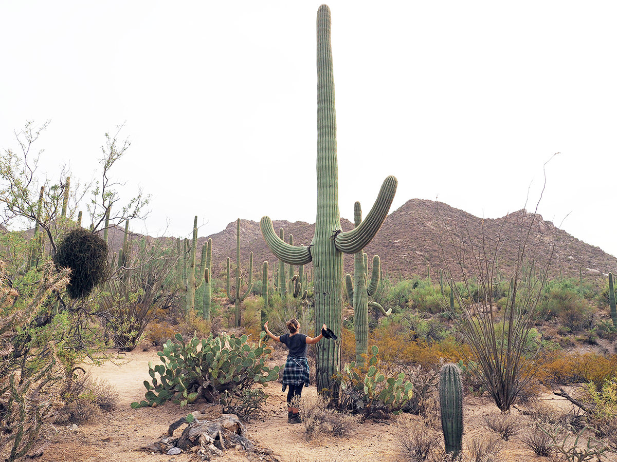 wandern in arizona im saguaro nationalpark