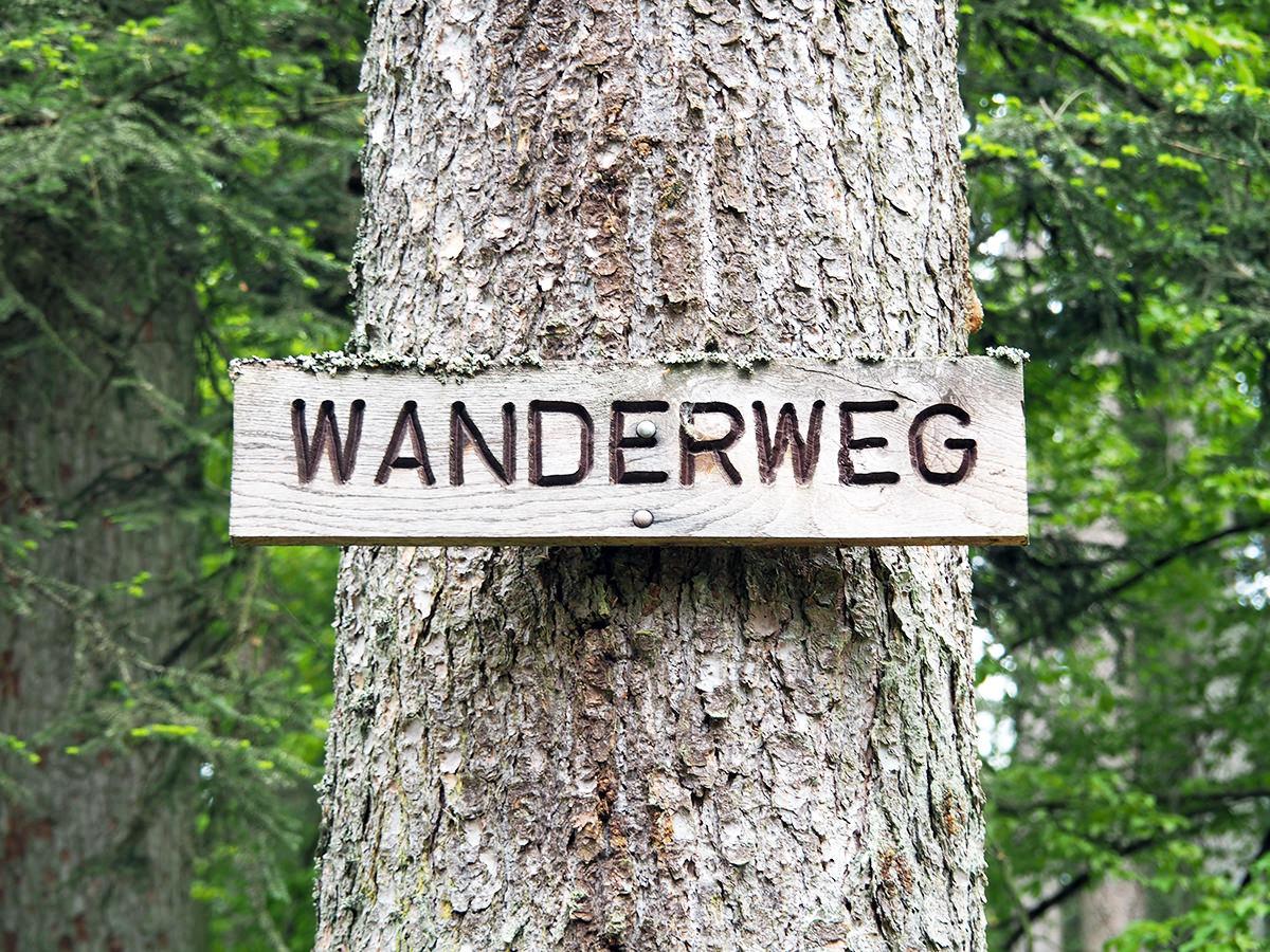 """Mehr als """"nur"""" Bäume: 3-Tages-Wanderung im nördlichen Schwarzwald // Anzeige"""