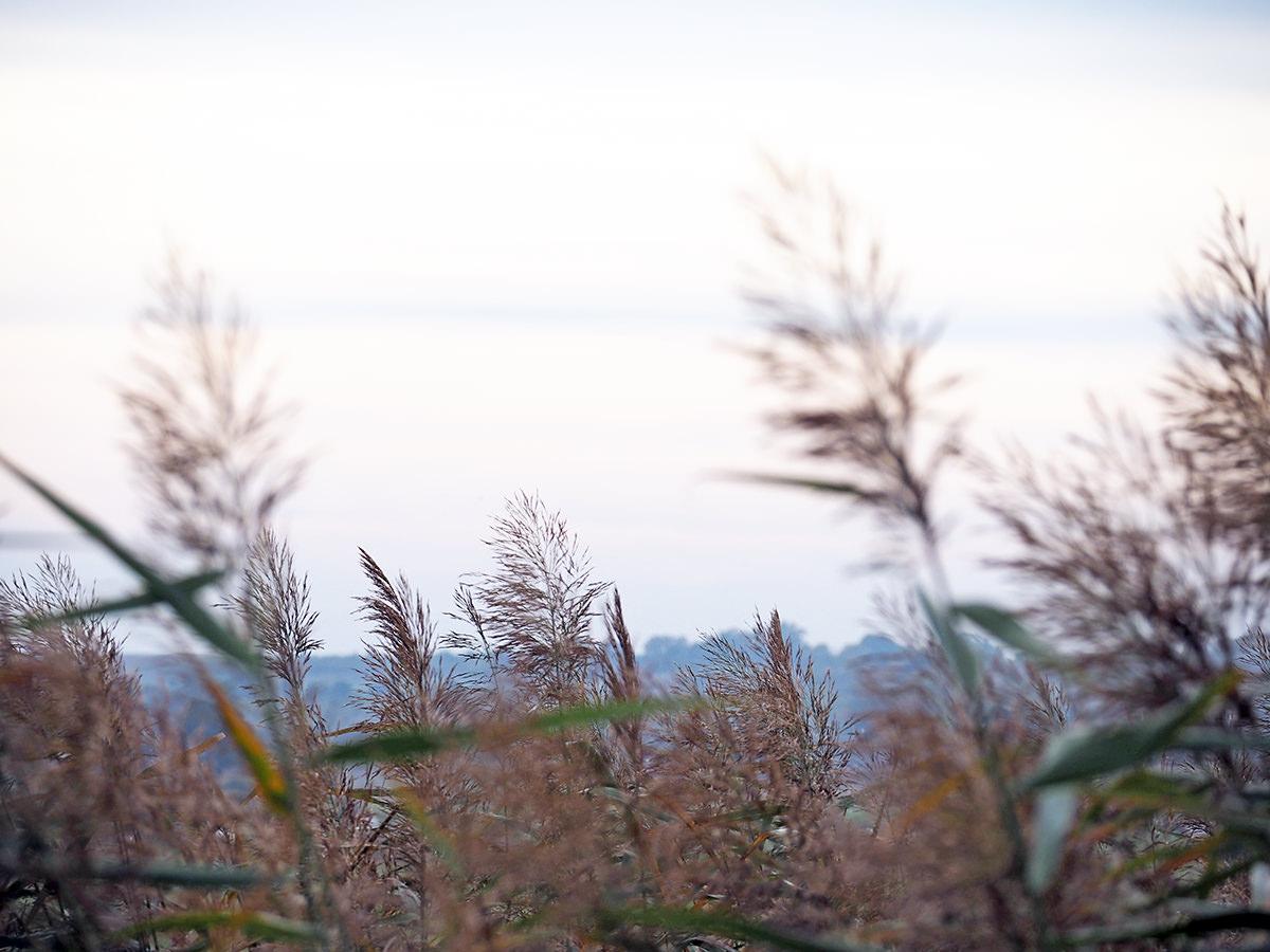 schorfheide uckermark morgengrauen